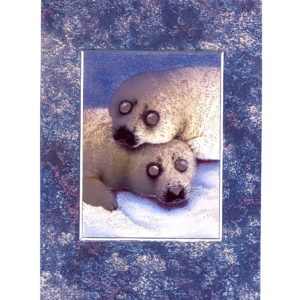3697 Two Baby Seals – by Howard Robinson