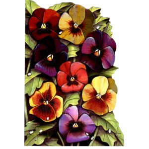 4123 Pansies – by Heron Dufex