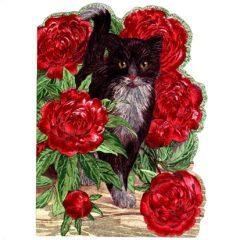 4139 Black & White Cat with Red Peonies – by Sarah Adams