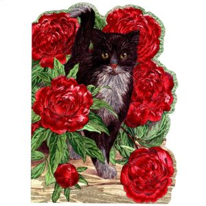 4139 Black & White Cat with Ballroses
