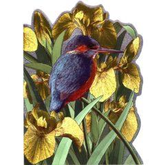 4142 Kingfisher w. Yellow Irises – by Sarah Adams