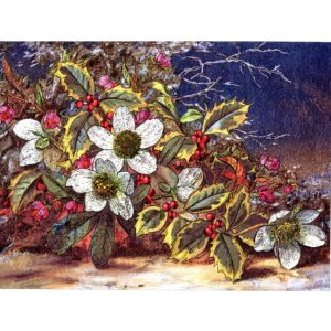 6630 Holly & Christmas Roses – by Albert Williams