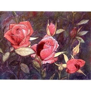 6639 Pink Roses – by Peter Worswick