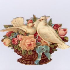 GE18 Doves & Roses @ Brian Paterson