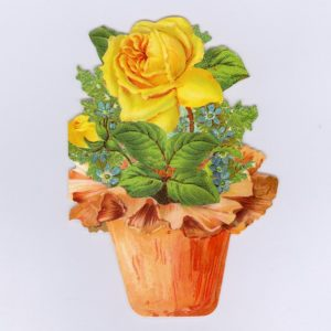 GE55 The Potted Rose @ Brian Paterson