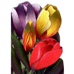 4090 Tulips – by Heron Dufex