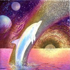 7056 Rainbow Dolphin