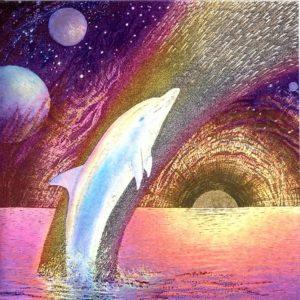 7056 Rainbow Dolphin – by Malcolm Horton