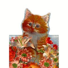 1020 HB Ginger Kitten