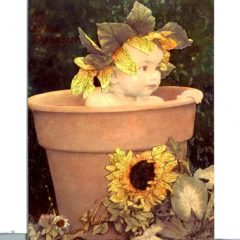 6609 Clay Pot Baby/Sunflowers