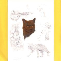 6664 Ginger Tom (Cat) – by Daphne Baxter