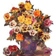 AW5 Violas & Pansies