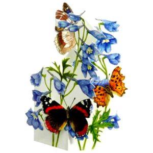 BUT7 Butterflies – Purple Emperor – Comma