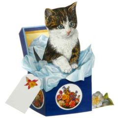 KIT7 Kitten in Box – Mischief