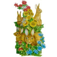 NAT1 Rabbits