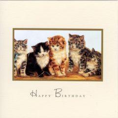 CT24 Five Lovely Kittens