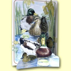 PP206 Mallard Ducks