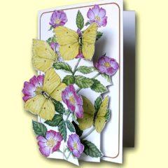 PP207 Brimstone Butterflies